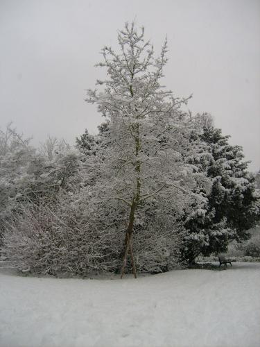 Sur Bruxelles, où j'ai grandi, lorsque j'étais jeune, je ne me souviens pas avoir vu autant de neige, que ce qui tombe depuis 2008.<br /> Elle me fascine, et me donne envie de me balader, dès qu'elle tombe.