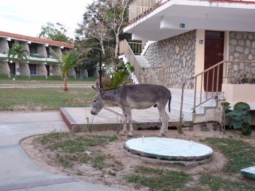 On pourrait penser que cette photo a été prise dans une ferme, mais il n'en est rien.<br /> En effet, elle a été prise dans un hôtel all-inclusive [all-in] dans la province de Guantánamo, à Cuba